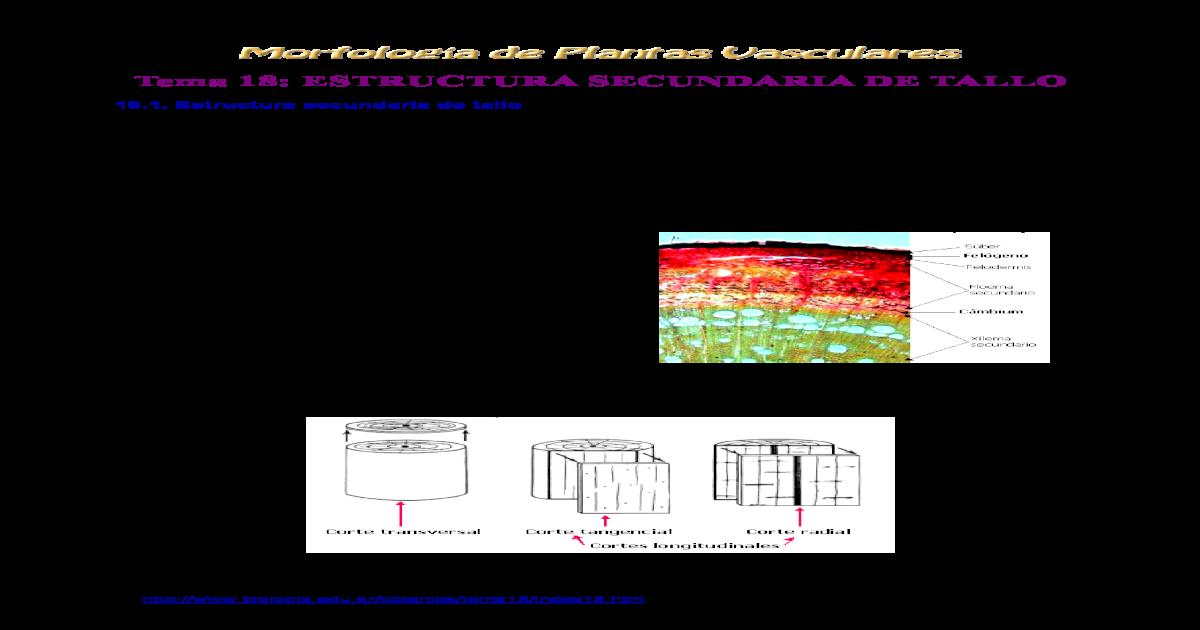 Tema18 Estructura Del Leo Hipertextos De Botnica