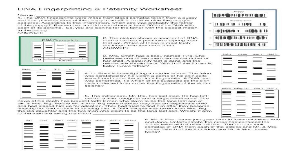 DNA Fingerprinting Paternity Worksheet - ??DNA ...